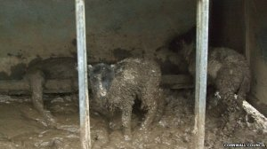 Animal welfare officers discovered 145 sheep which had to be put down